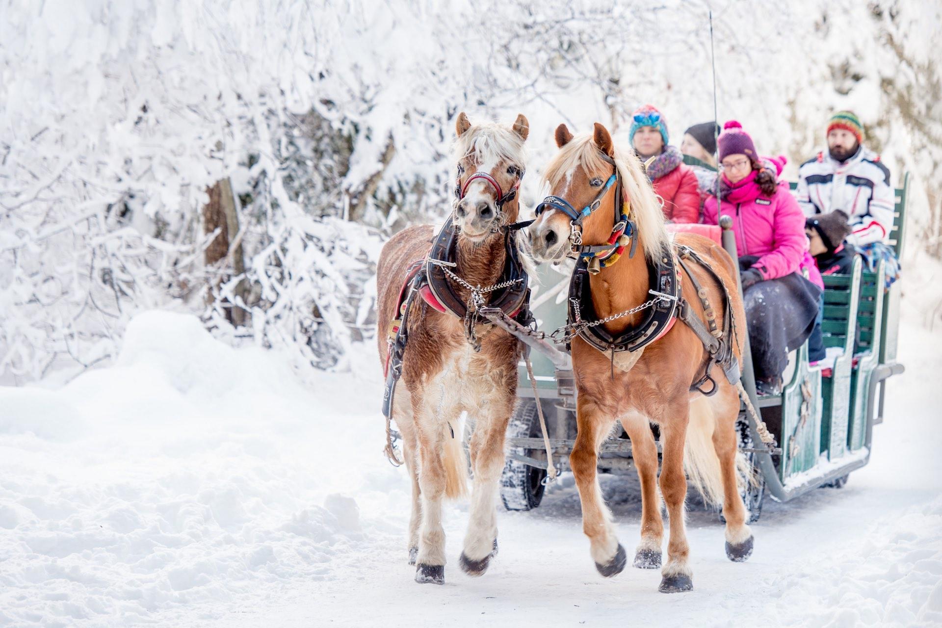 Andalo Vacanze - Dolomiti Paganella Family Park - Slitta trainata da cavalli Andalo